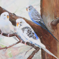 Budgies in the Landing Zone